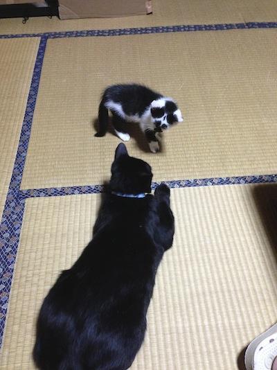 cat_etc106.jpg