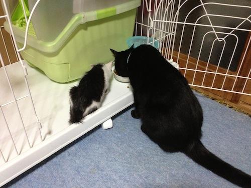 cat_etc107.jpg