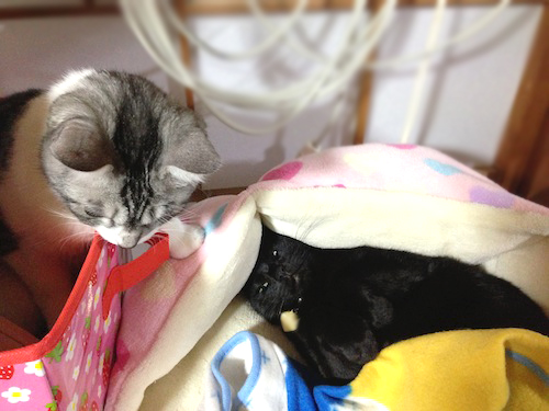 cats075.jpg