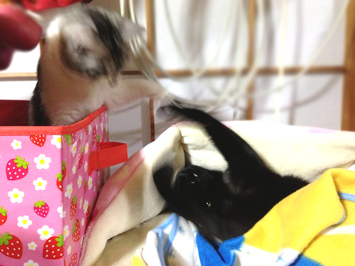 cats076.jpg