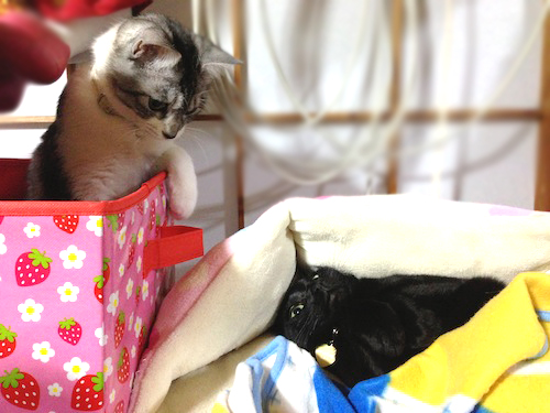 cats077.jpg