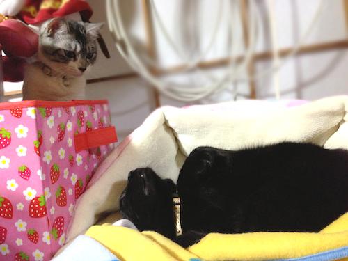 cats078.jpg
