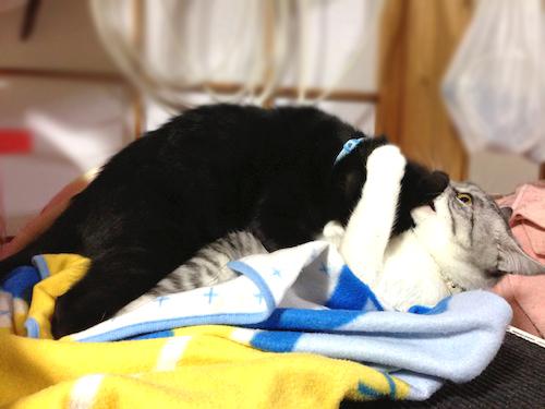 cats080.jpg