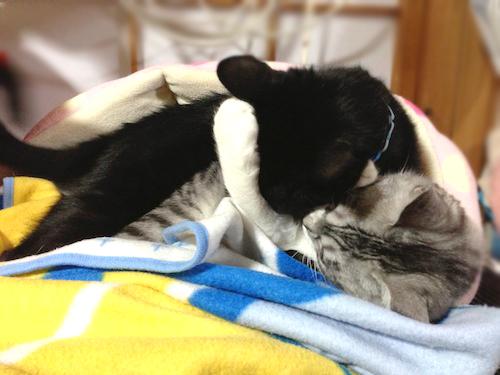 cats081.jpg