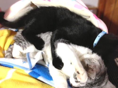 cats083.jpg
