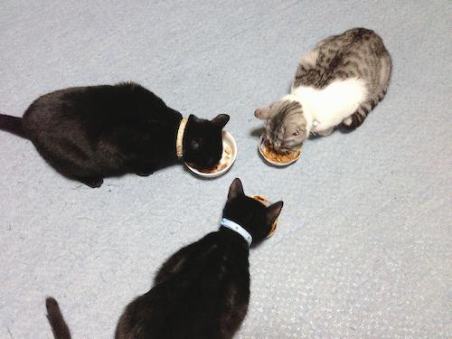 cats084.jpg