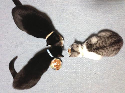 cats085.jpg