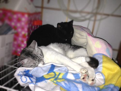 cats086.jpg