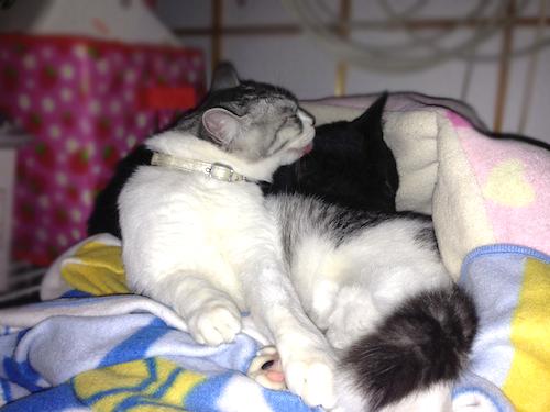 cats087.jpg