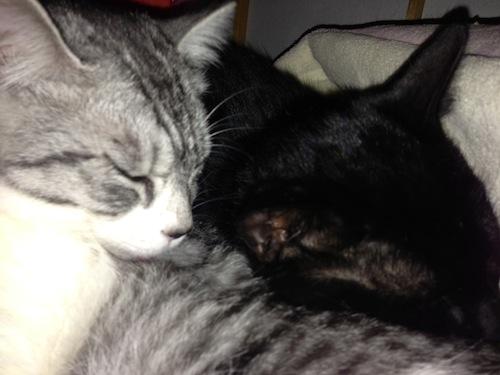 cats089.jpg