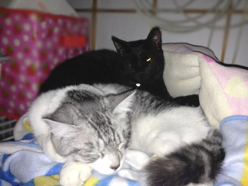 cats090.jpg