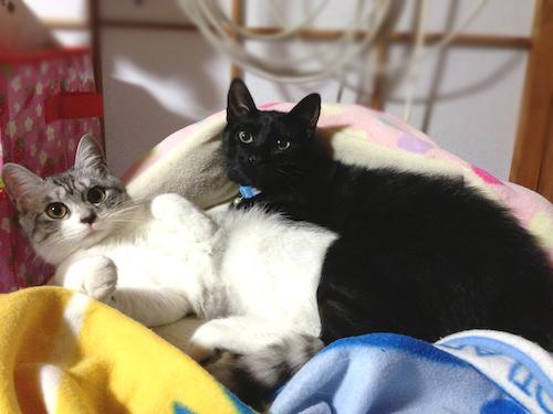 cats091.jpg