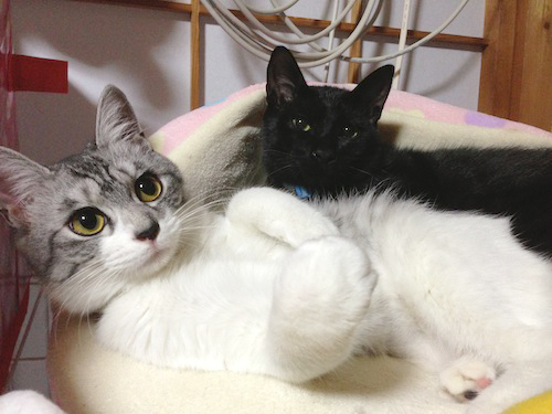 cats092.jpg