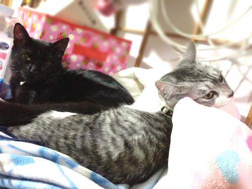 cats094.jpg