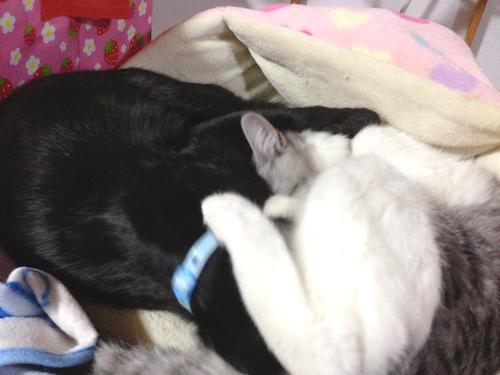 cats096.jpg