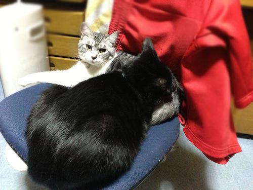 cats097.jpg