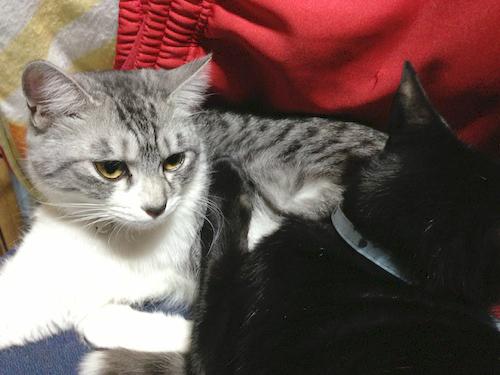 cats098.jpg