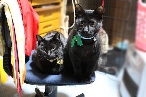 cats101.jpg