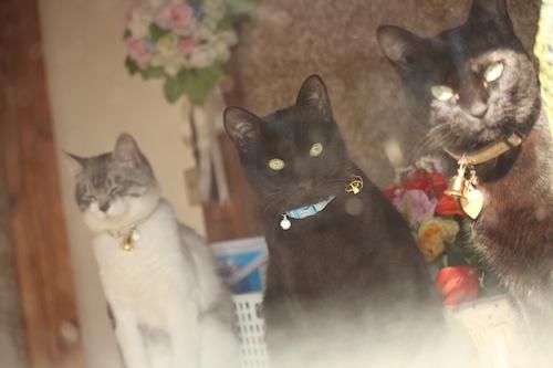 cats102.jpg