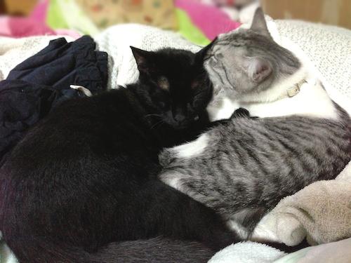 cats104.jpg