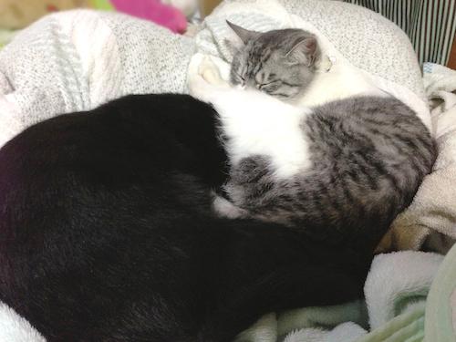 cats107.jpg