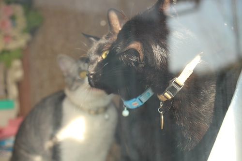 cats108.jpg