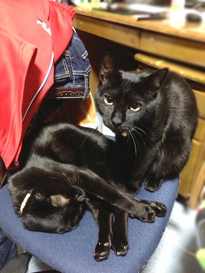 cats109.jpg