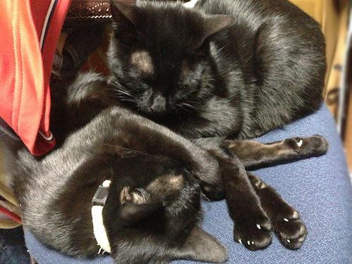 cats112.jpg