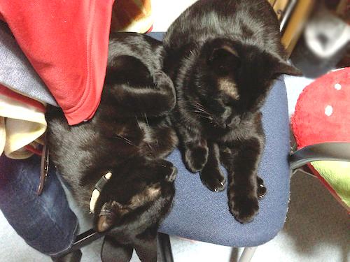 cats114.jpg