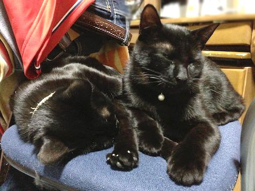 cats115.jpg