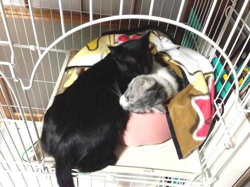 cats116.jpg