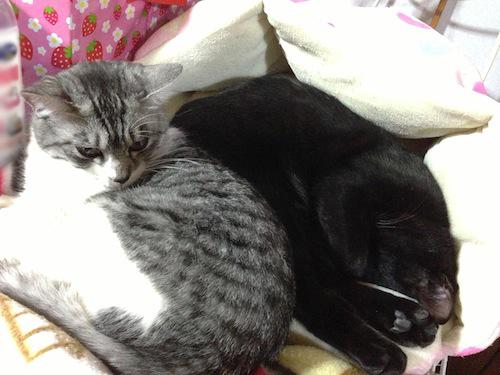 cats119.jpg