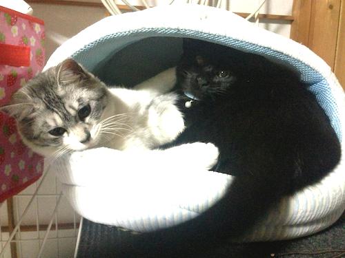 cats120.jpg
