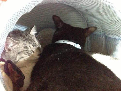 cats121.jpg