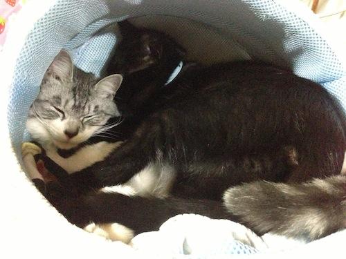 cats122.jpg