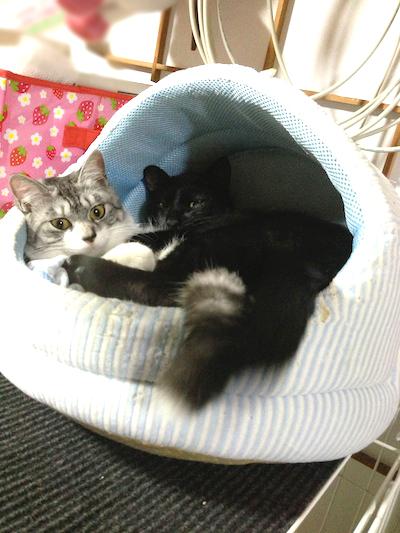 cats123.jpg