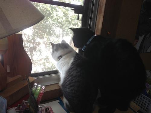cats125.jpg