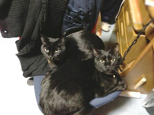 cats126.jpg