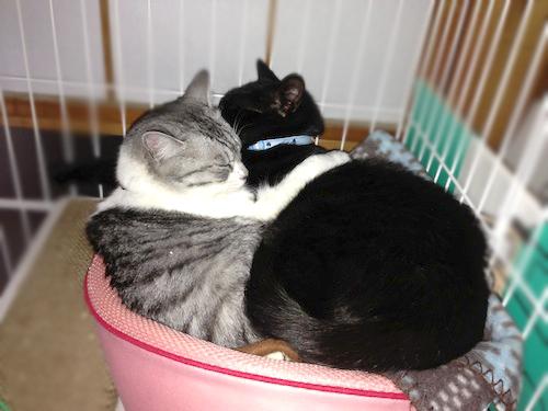 cats128.jpg