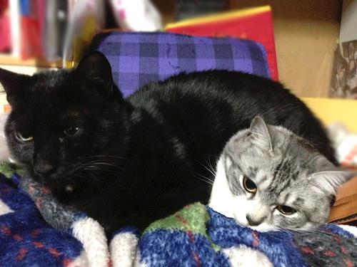 cats129.jpg