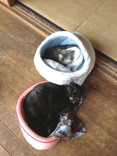 cats131.jpg