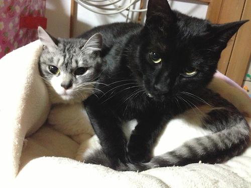 cats132.jpg