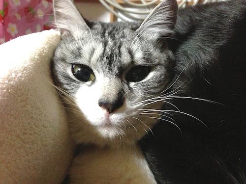 cats133.jpg