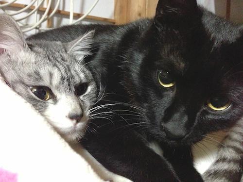cats134.jpg