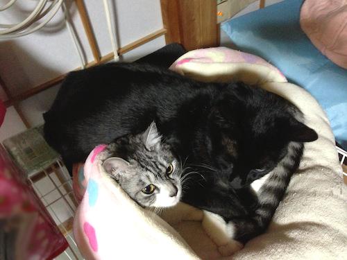 cats135.jpg