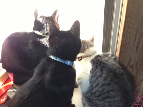 cats137.jpg