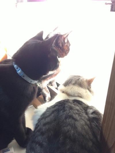 cats138.jpg