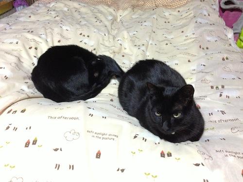 cats139.jpg