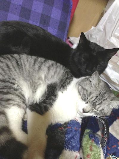 cats141.jpg