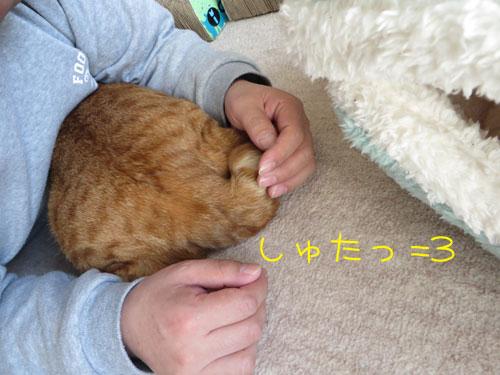 隙間ハンター参上=3